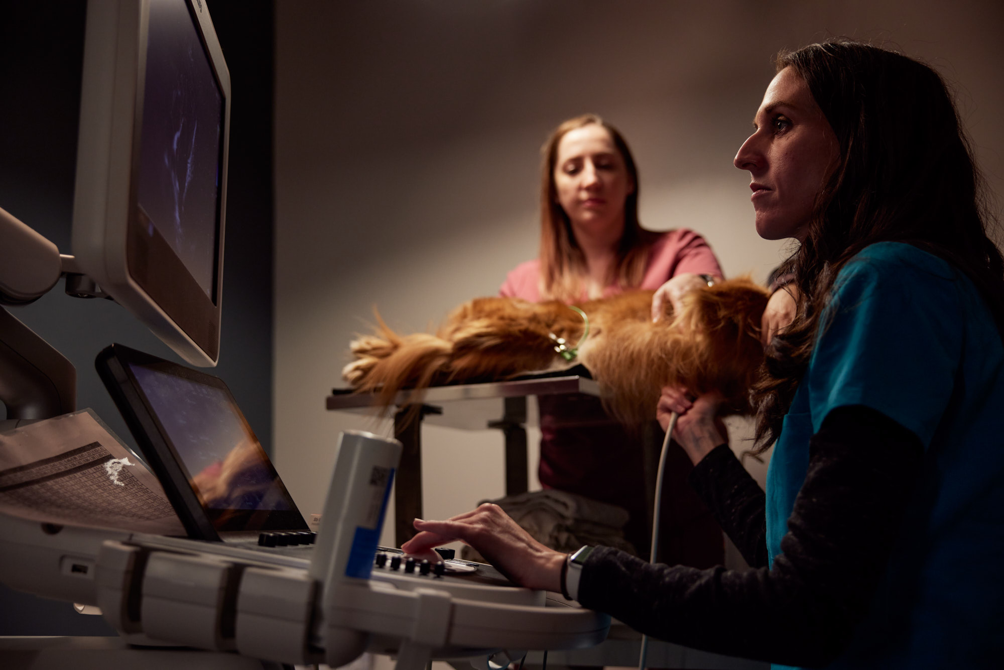 Veterinary Ultrasound | Healthcare Lifestyle Photography