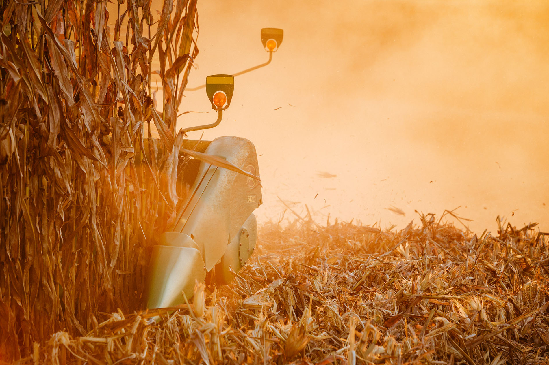 Corn Harvest | Agriculture Industrial Advertising Photographer